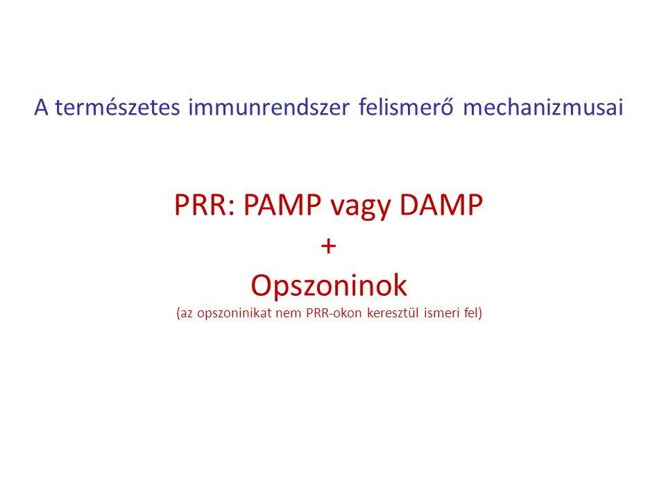 A természetes immunrendszer felismerő mechanizmusai PRR: PAMP vagy DAMP + Opszoninok (az opszoninikat nem PRR-okon keresztül ismeri fel)