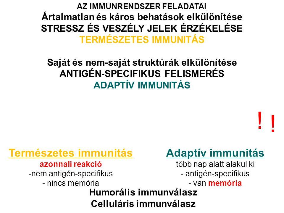 AZ IMMUNRENDSZER FELADATAI Ártalmatlan és káros behatások elkülönítése STRESSZ ÉS VESZÉLY JELEK ÉRZÉKELÉSE TERMÉSZETES IMMUNITÁS Saját és nem-saját struktúrák elkülönítése ANTIGÉN-SPECIFIKUS FELISMERÉS ADAPTÍV IMMUNITÁS Természetes immunitás azonnali reakció -nem antigén-specifikus - nincs memória Adaptív immunitás több nap alatt alakul ki - antigén-specifikus - van memória Humorális immunválasz Celluláris immunválasz .