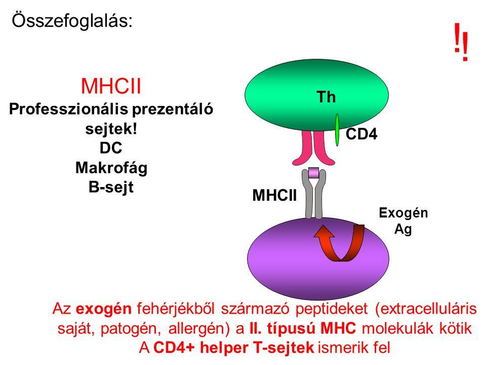 Exogén Ag Th Az exogén fehérjékből származó peptideket (extracelluláris saját, patogén, allergén) a II.