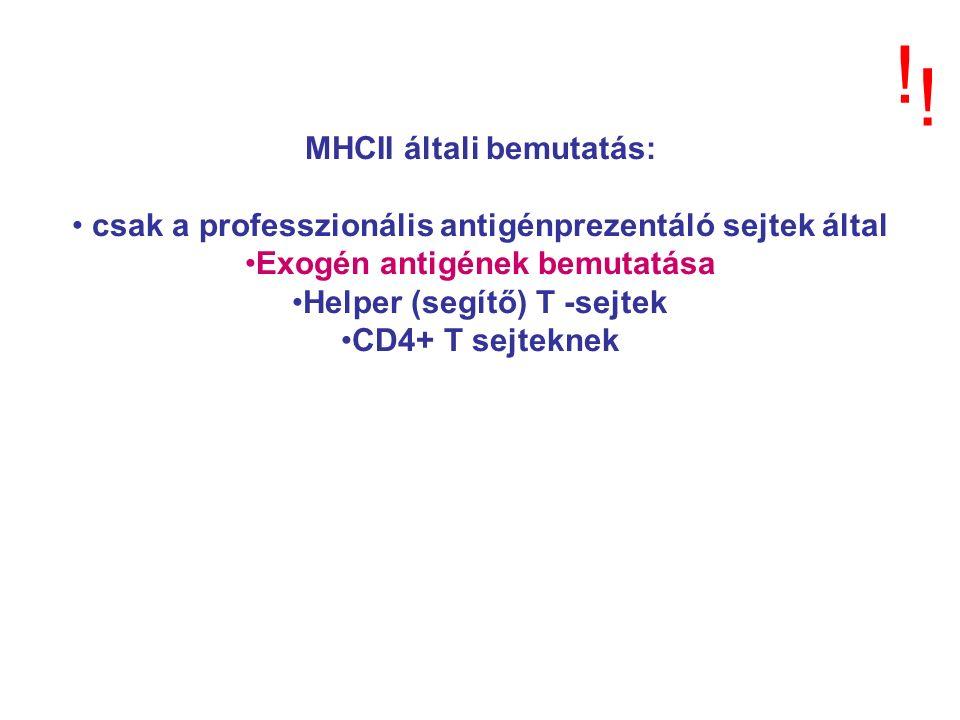 MHCII általi bemutatás: csak a professzionális antigénprezentáló sejtek által Exogén antigének bemutatása Helper (segítő) T -sejtek CD4+ T sejteknek .