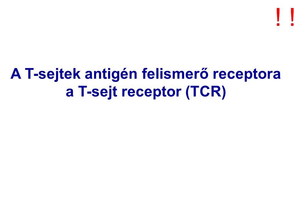 A T-sejtek antigén felismerő receptora a T-sejt receptor (TCR) !!
