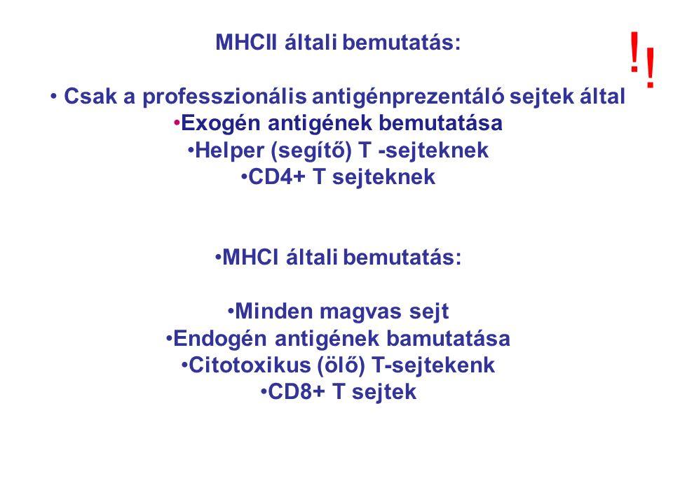 MHCII általi bemutatás: Csak a professzionális antigénprezentáló sejtek által Exogén antigének bemutatása Helper (segítő) T -sejteknek CD4+ T sejteknek MHCI általi bemutatás: Minden magvas sejt Endogén antigének bamutatása Citotoxikus (ölő) T-sejtekenk CD8+ T sejtek .