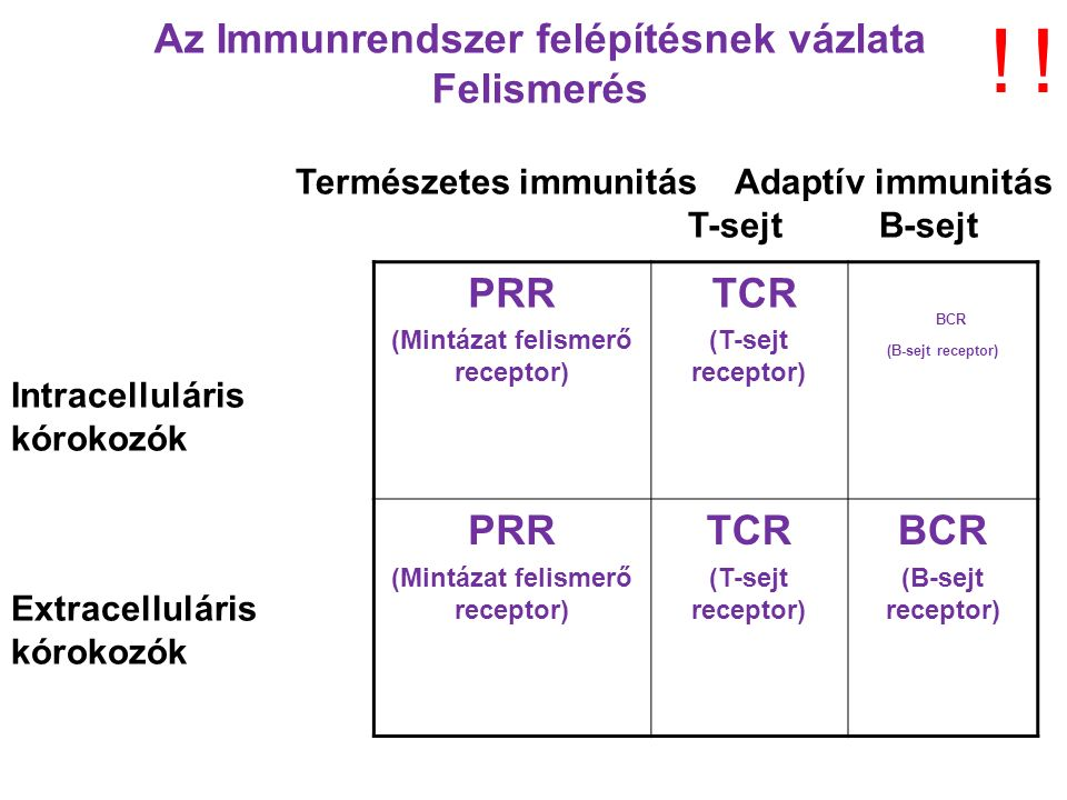 Természetes immunitás Adaptív immunitás T-sejt B-sejt Intracelluláris kórokozók Extracelluláris kórokozók PRR (Mintázat felismerő receptor) TCR (T-sejt receptor) BCR (B-sejt receptor) PRR (Mintázat felismerő receptor) TCR (T-sejt receptor) BCR (B-sejt receptor) Az Immunrendszer felépítésnek vázlata Felismerés !!
