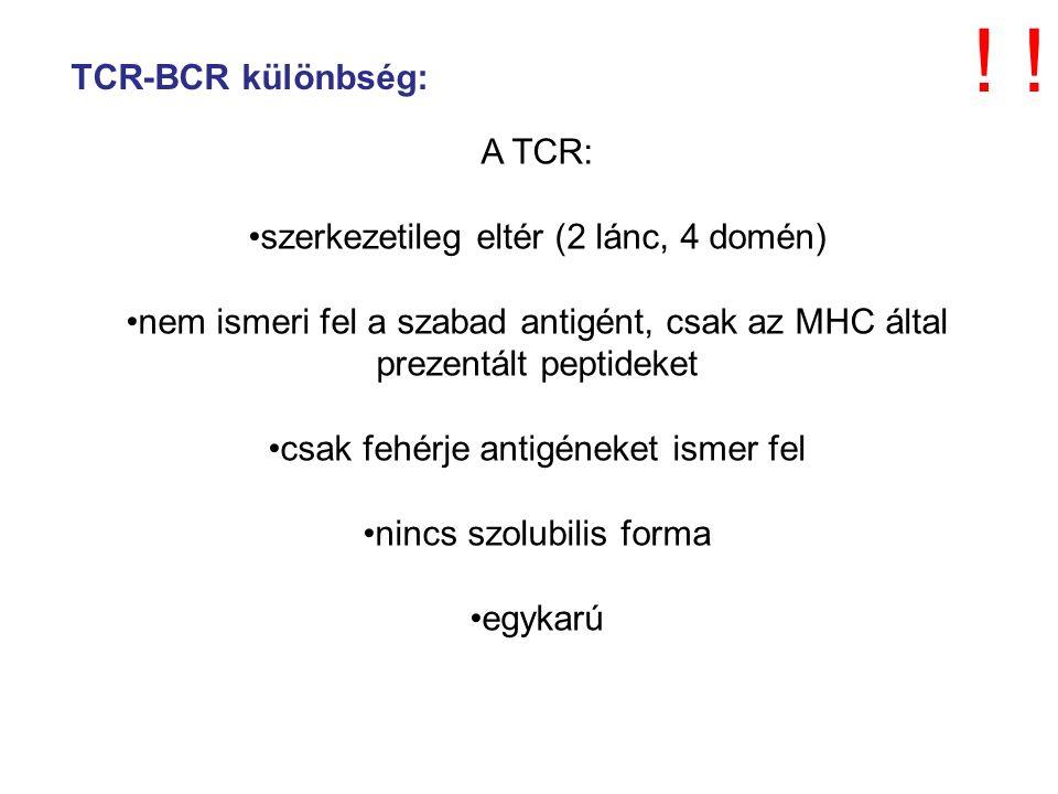 A TCR: szerkezetileg eltér (2 lánc, 4 domén) nem ismeri fel a szabad antigént, csak az MHC által prezentált peptideket csak fehérje antigéneket ismer fel nincs szolubilis forma egykarú TCR-BCR különbség: !!