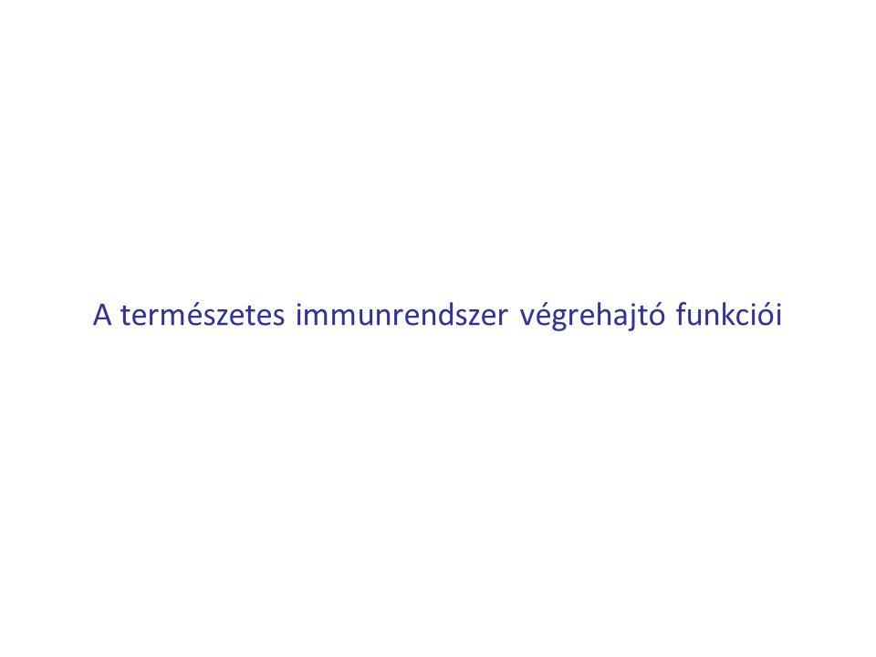 A természetes immunrendszer végrehajtó funkciói