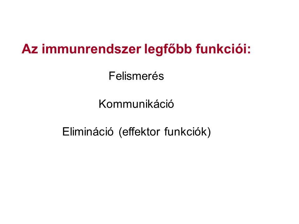 Az immunrendszer legfőbb funkciói: Felismerés Kommunikáció Elimináció (effektor funkciók)