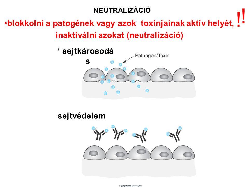 NEUTRALIZÁCIÓ sejtkárosodá s sejtvédelem .