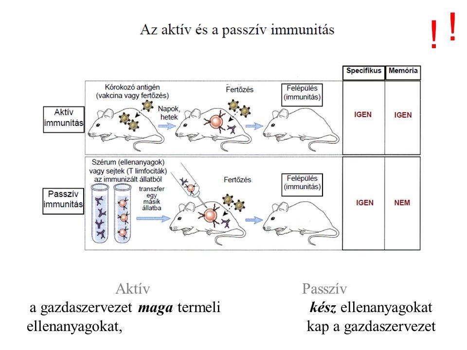 Passzív immunizálás I.