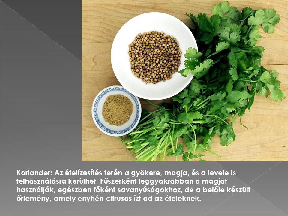 Koriander: Az ételízesítés terén a gyökere, magja, és a levele is felhasználásra kerülhet.