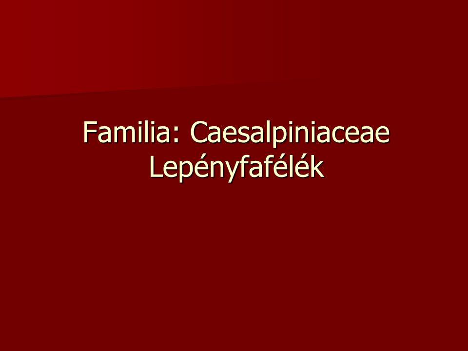 Familia: Caesalpiniaceae Lepényfafélék