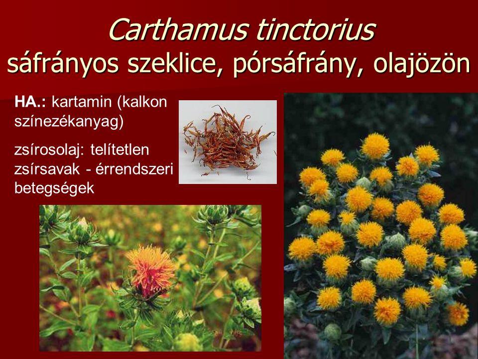 Carthamus tinctorius sáfrányos szeklice, pórsáfrány, olajözön HA.: kartamin (kalkon színezékanyag) zsírosolaj: telítetlen zsírsavak - érrendszeri bete