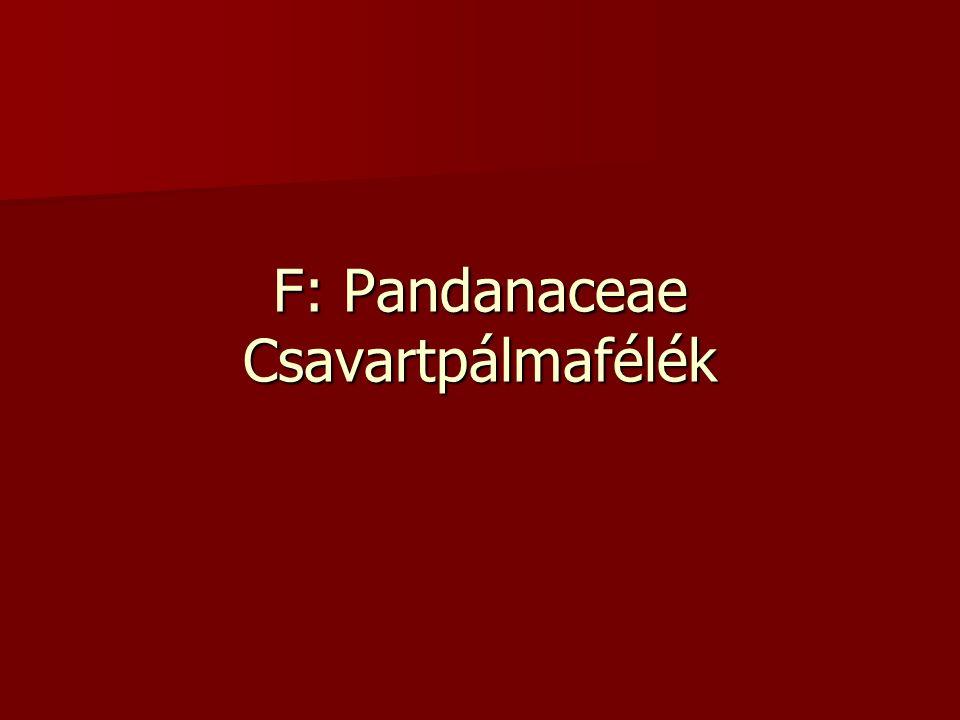 F: Pandanaceae Csavartpálmafélék