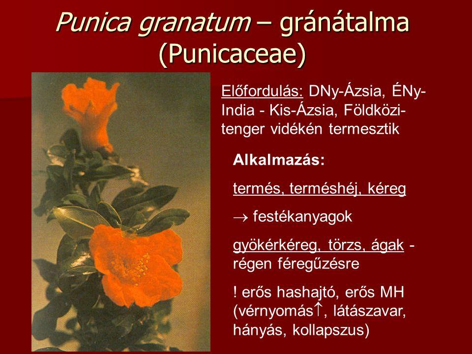 Punica granatum – gránátalma (Punicaceae) Előfordulás: DNy-Ázsia, ÉNy- India - Kis-Ázsia, Földközi- tenger vidékén termesztik Alkalmazás: termés, terméshéj, kéreg  festékanyagok gyökérkéreg, törzs, ágak - régen féregűzésre .