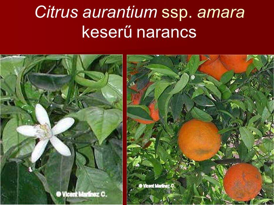 Citrus aurantium ssp. amara keserű narancs