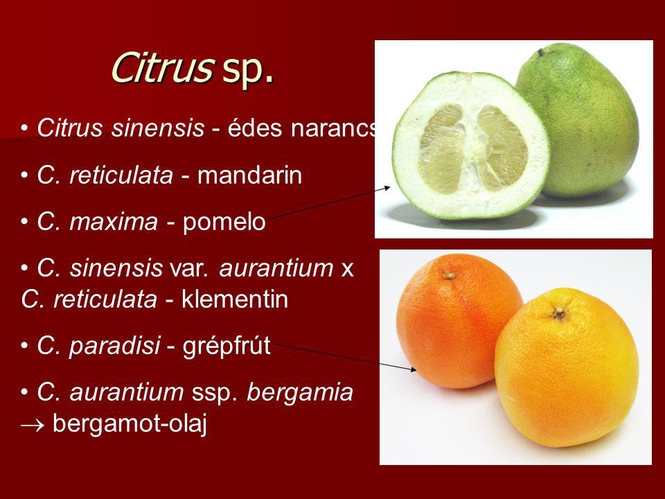 Citrus sp. Citrus sinensis - édes narancs C. reticulata - mandarin C.