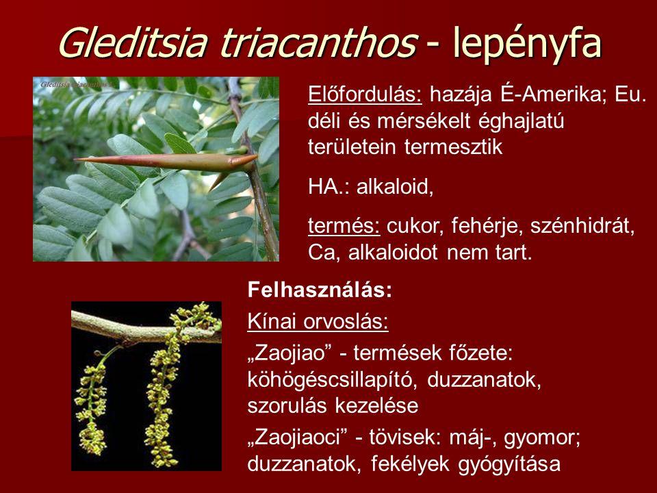 Gleditsia triacanthos - lepényfa Előfordulás: hazája É-Amerika; Eu. déli és mérsékelt éghajlatú területein termesztik HA.: alkaloid, termés: cukor, fe