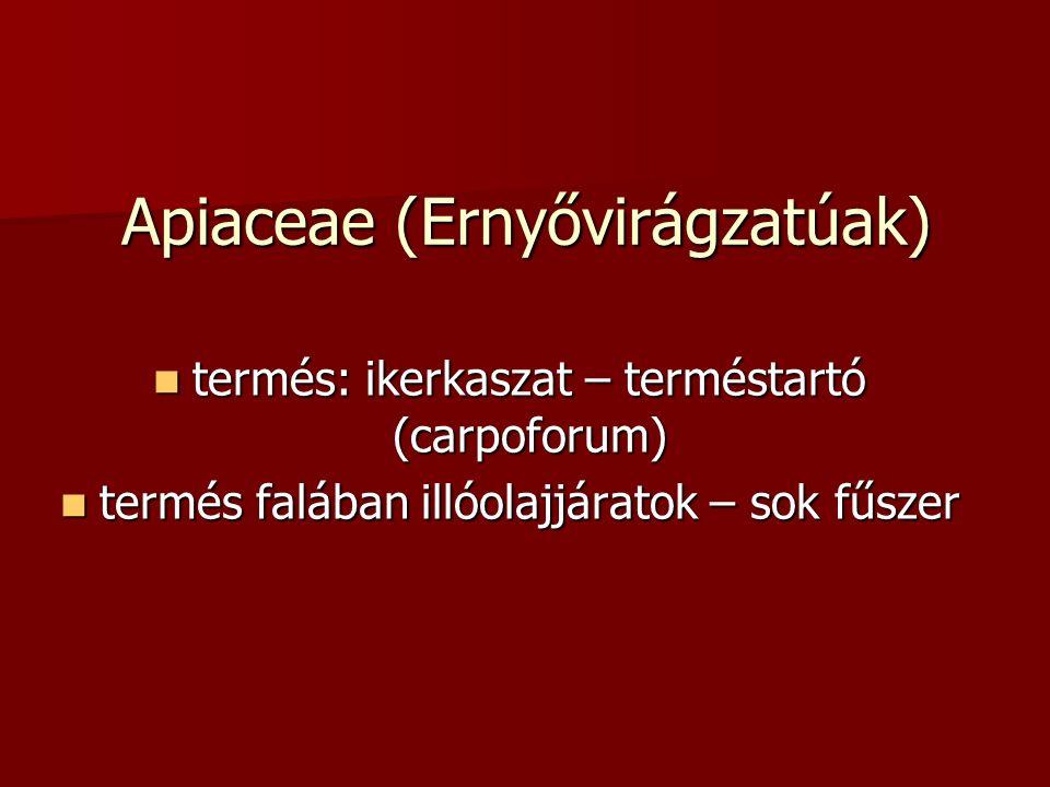 Apiaceae (Ernyővirágzatúak) termés: ikerkaszat – terméstartó (carpoforum) termés: ikerkaszat – terméstartó (carpoforum) termés falában illóolajjáratok