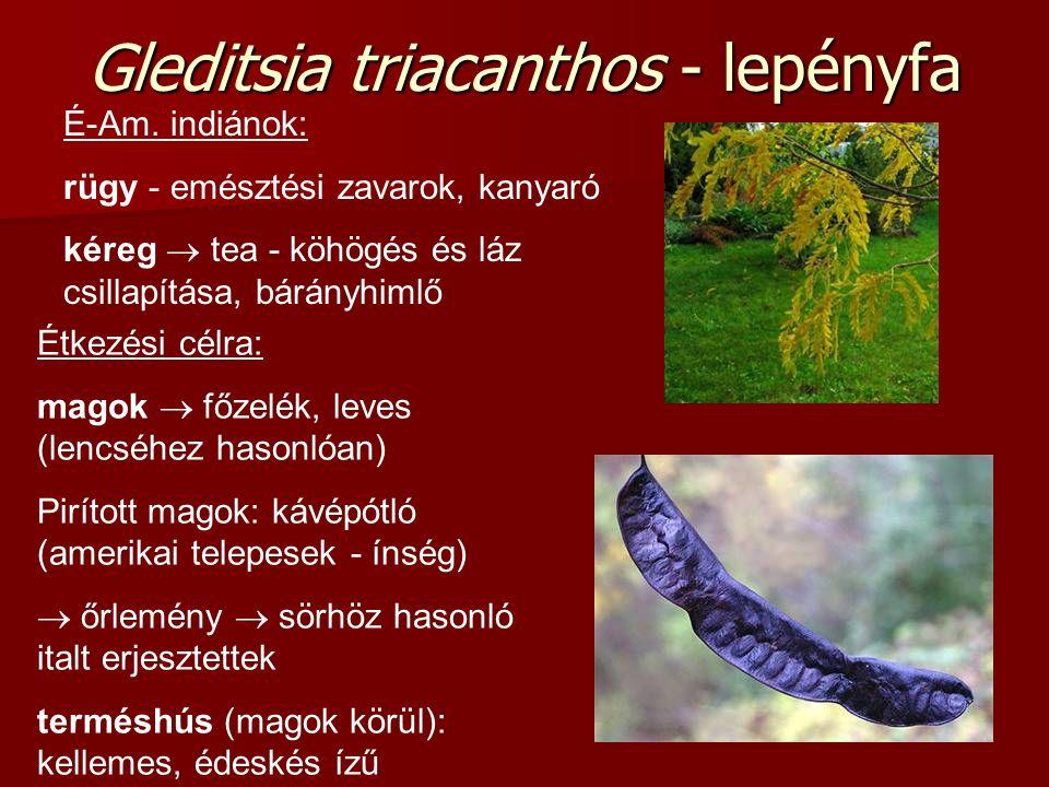 Gleditsia triacanthos - lepényfa Étkezési célra: magok  főzelék, leves (lencséhez hasonlóan) Pirított magok: kávépótló (amerikai telepesek - ínség) 
