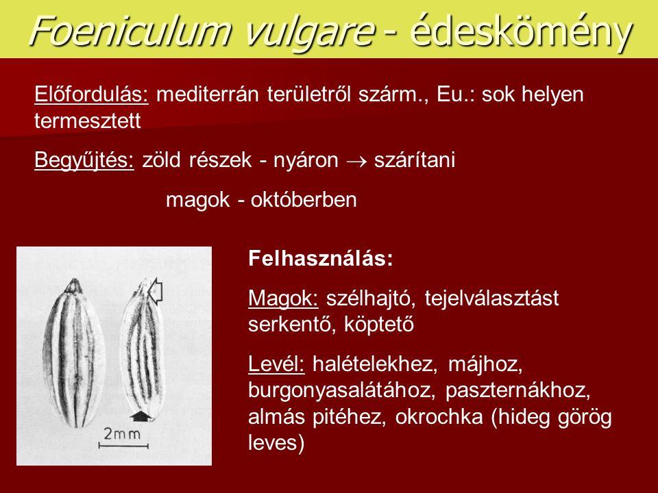 Foeniculum vulgare - édeskömény Előfordulás: mediterrán területről szárm., Eu.: sok helyen termesztett Begyűjtés: zöld részek - nyáron  szárítani mag