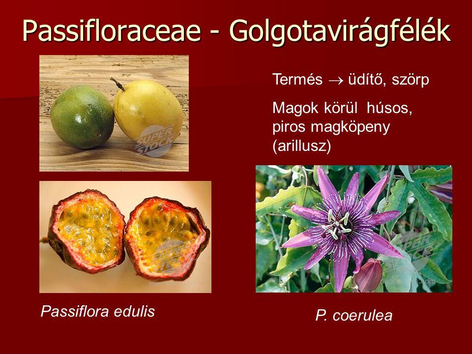 Passifloraceae - Golgotavirágfélék Passiflora edulis P.
