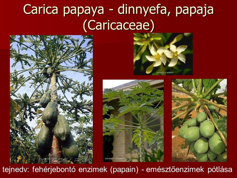Carica papaya - dinnyefa, papaja (Caricaceae) tejnedv: fehérjebontó enzimek (papain) - emésztőenzimek pótlása