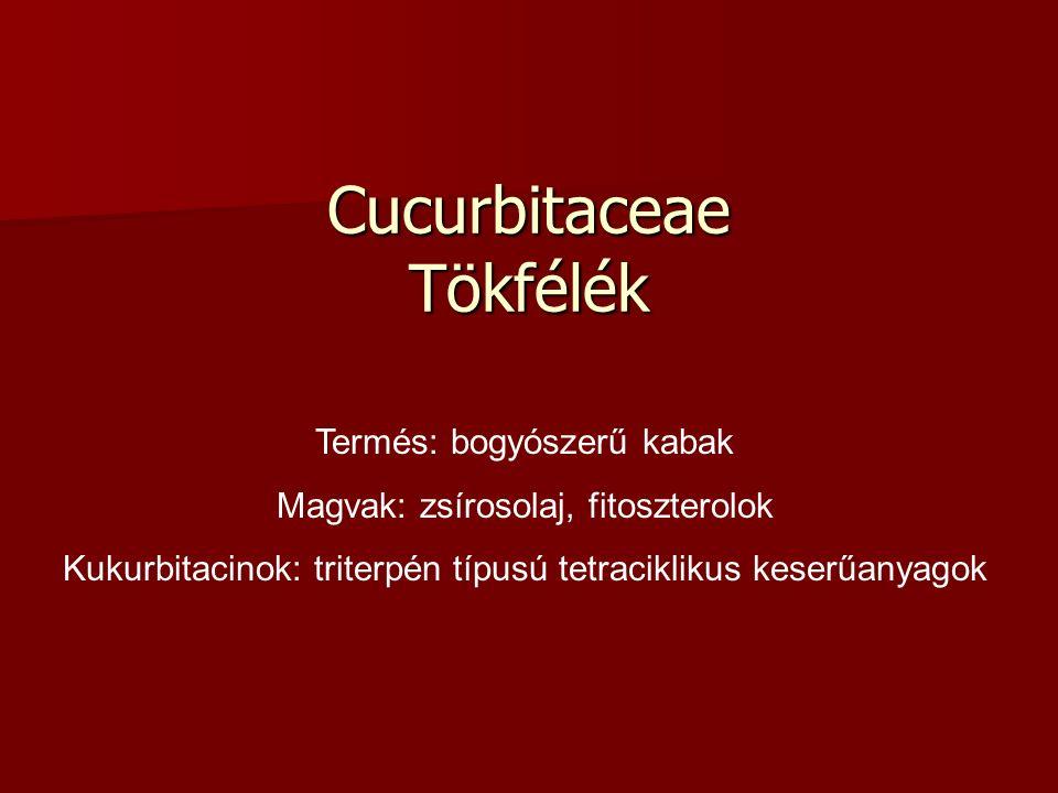Cucurbitaceae Tökfélék Termés: bogyószerű kabak Magvak: zsírosolaj, fitoszterolok Kukurbitacinok: triterpén típusú tetraciklikus keserűanyagok