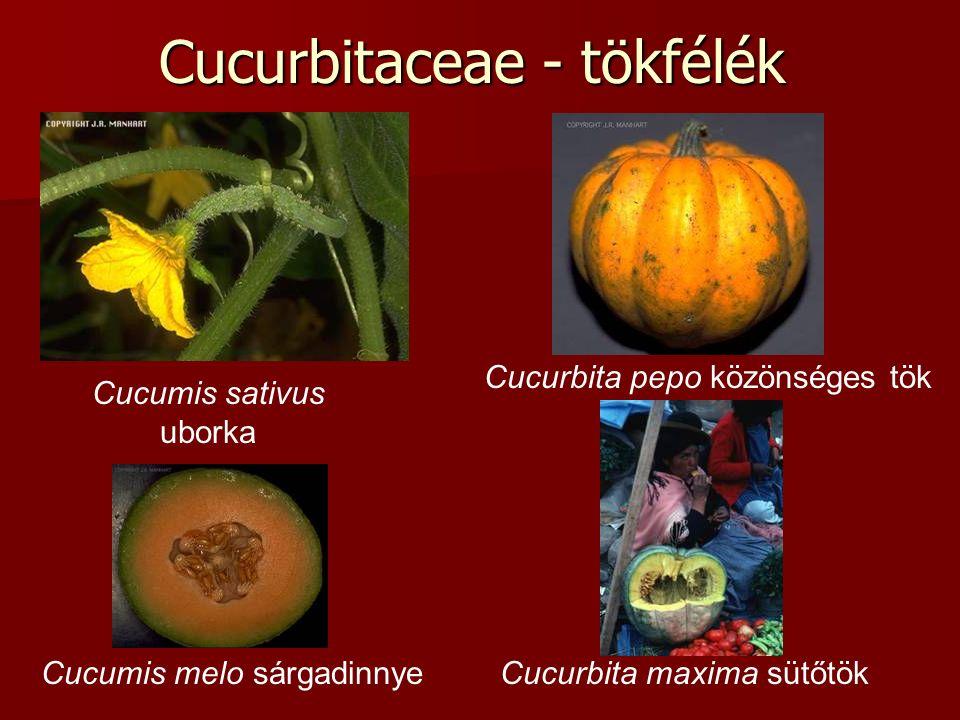 Cucurbitaceae - tökfélék Cucumis sativus uborka Cucumis melo sárgadinnye Cucurbita pepo közönséges tök Cucurbita maxima sütőtök