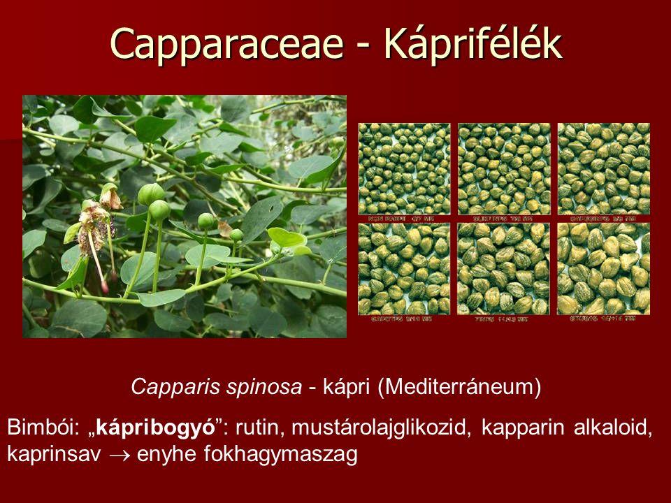 """Capparaceae - Káprifélék Capparis spinosa - kápri (Mediterráneum) Bimbói: """"kápribogyó : rutin, mustárolajglikozid, kapparin alkaloid, kaprinsav  enyhe fokhagymaszag"""