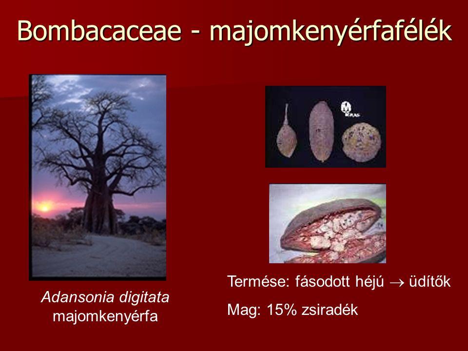 Bombacaceae - majomkenyérfafélék Adansonia digitata majomkenyérfa Termése: fásodott héjú  üdítők Mag: 15% zsiradék