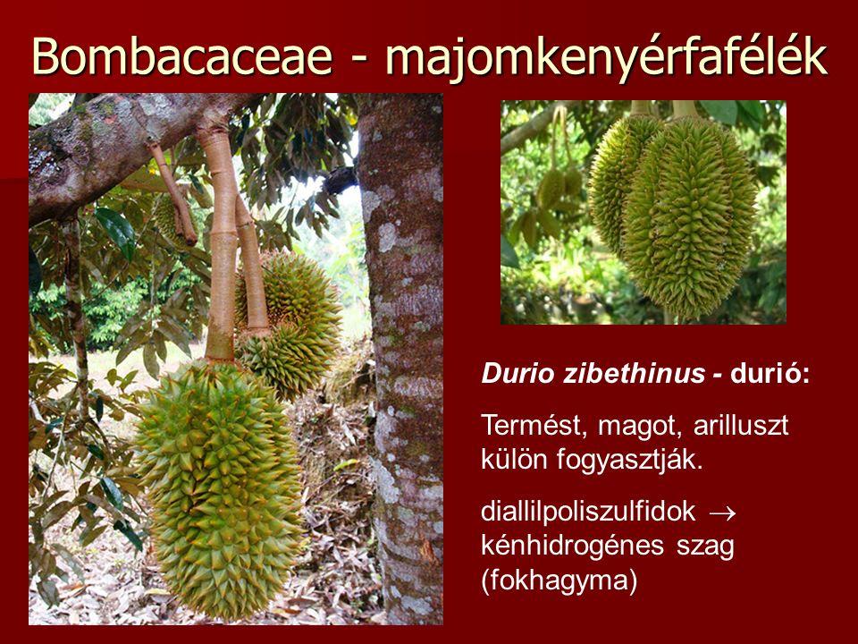 Bombacaceae - majomkenyérfafélék Durio zibethinus - durió: Termést, magot, arilluszt külön fogyasztják. diallilpoliszulfidok  kénhidrogénes szag (fok