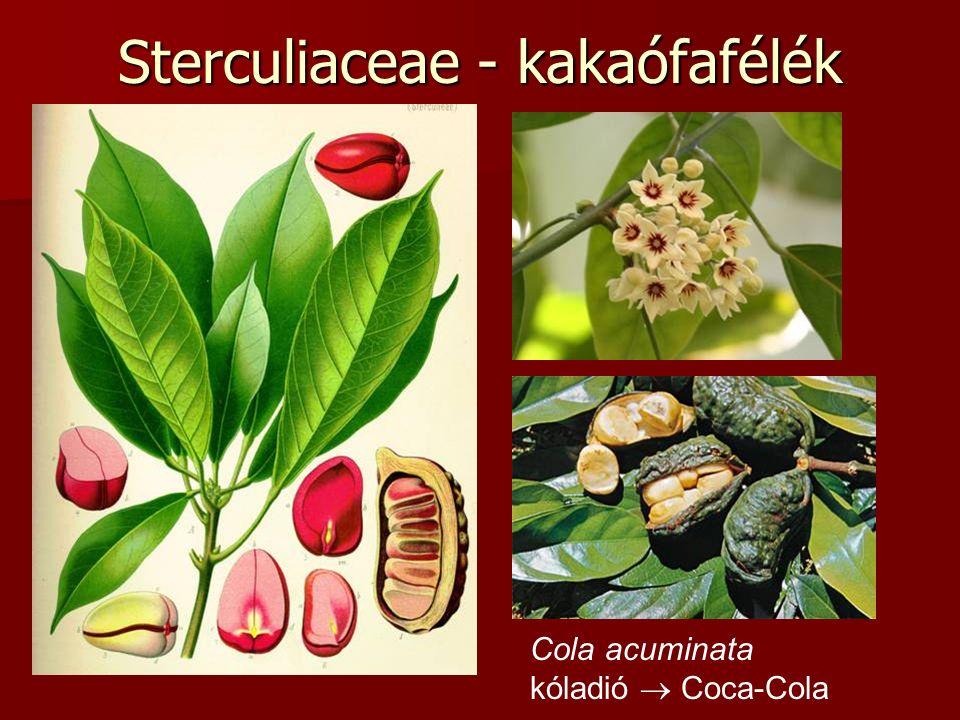 Sterculiaceae - kakaófafélék Cola acuminata kóladió  Coca-Cola