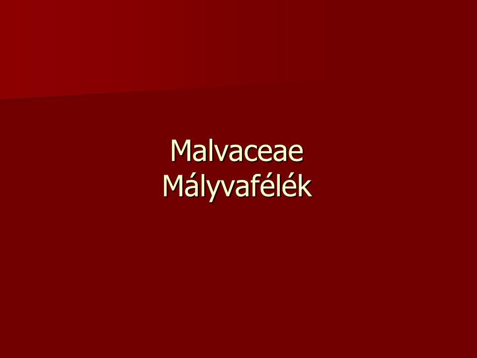 Malvaceae Mályvafélék