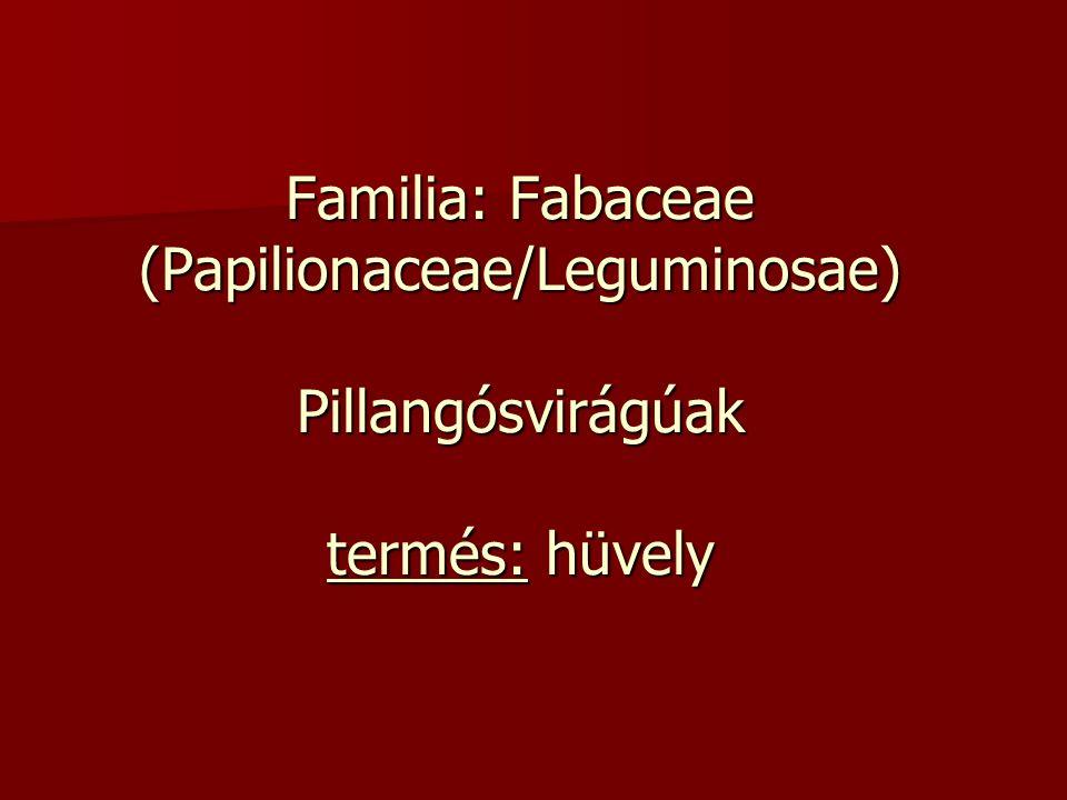 Familia: Fabaceae (Papilionaceae/Leguminosae) Pillangósvirágúak termés: hüvely