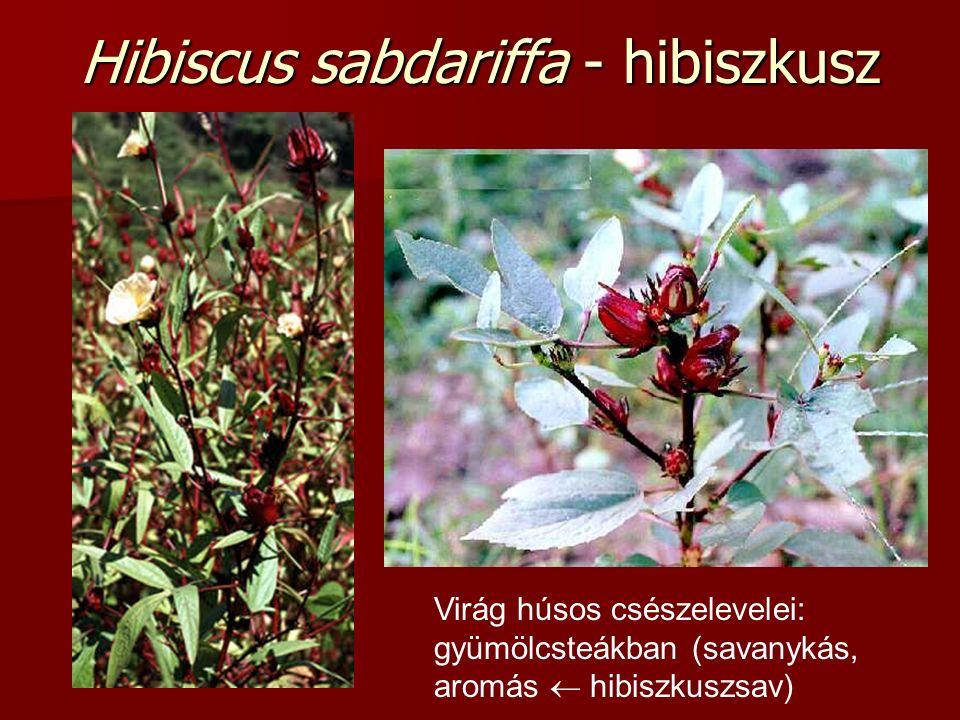 Hibiscus sabdariffa - hibiszkusz Virág húsos csészelevelei: gyümölcsteákban (savanykás, aromás  hibiszkuszsav)
