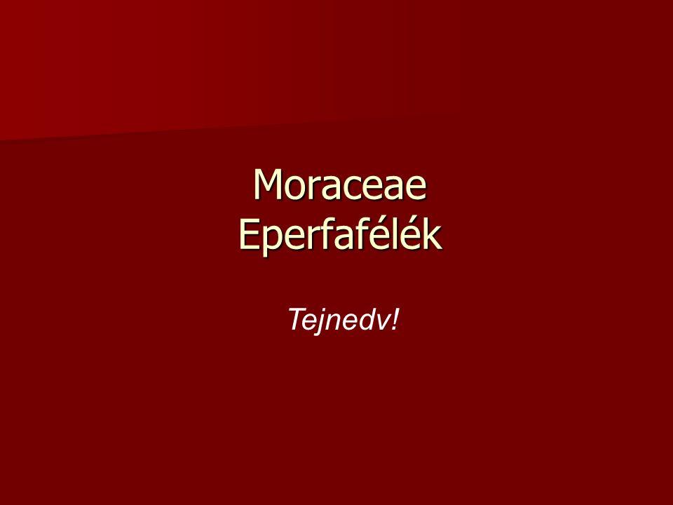 Moraceae Eperfafélék Tejnedv!
