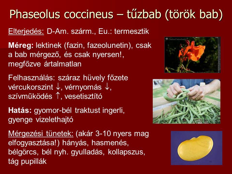 Phaseolus coccineus – tűzbab (török bab) Elterjedés: D-Am. szárm., Eu.: termesztik Méreg: lektinek (fazin, fazeolunetin), csak a bab mérgező, és csak