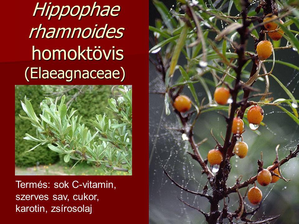 Hippophae rhamnoides homoktövis (Elaeagnaceae) Termés: sok C-vitamin, szerves sav, cukor, karotin, zsírosolaj