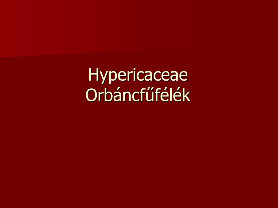 Hypericaceae Orbáncfűfélék