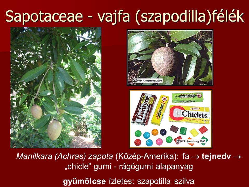"""Sapotaceae - vajfa (szapodilla)félék Manilkara (Achras) zapota (Közép-Amerika): fa  tejnedv  """"chicle gumi - rágógumi alapanyag gyümölcse ízletes: szapotilla szilva"""