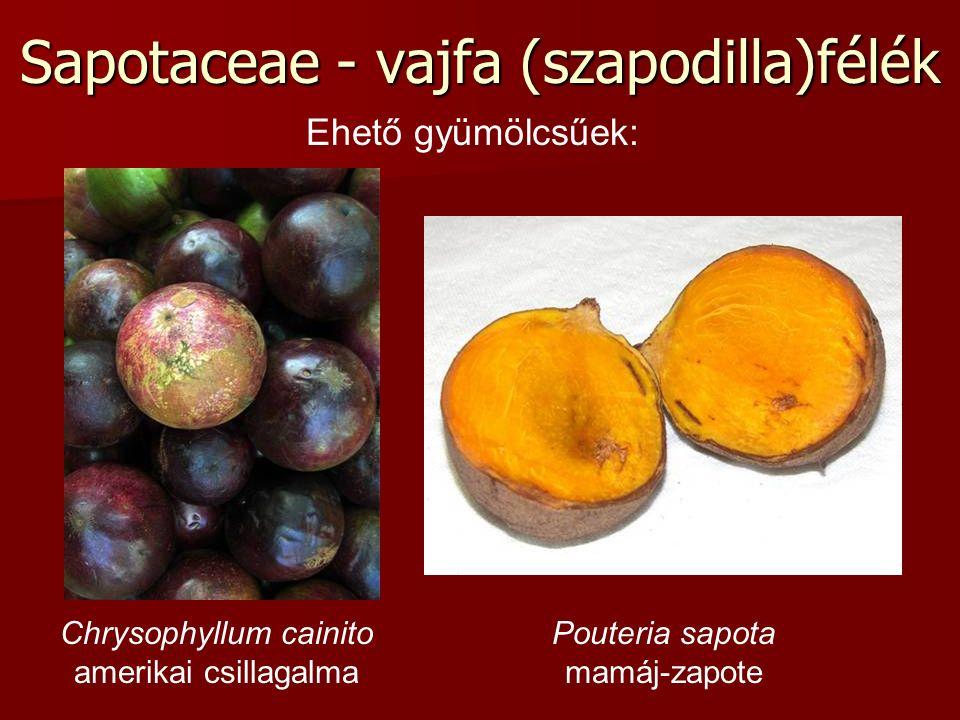 Sapotaceae - vajfa (szapodilla)félék Chrysophyllum cainito amerikai csillagalma Pouteria sapota mamáj-zapote Ehető gyümölcsűek: