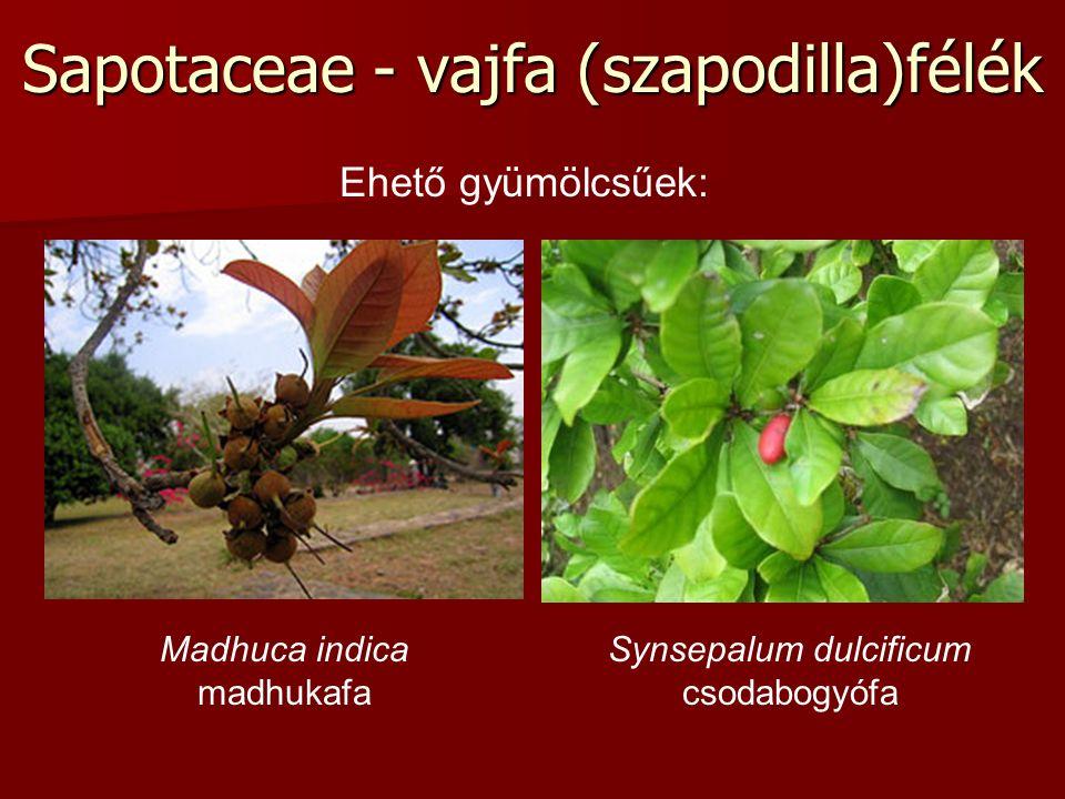 Sapotaceae - vajfa (szapodilla)félék Madhuca indica madhukafa Synsepalum dulcificum csodabogyófa Ehető gyümölcsűek:
