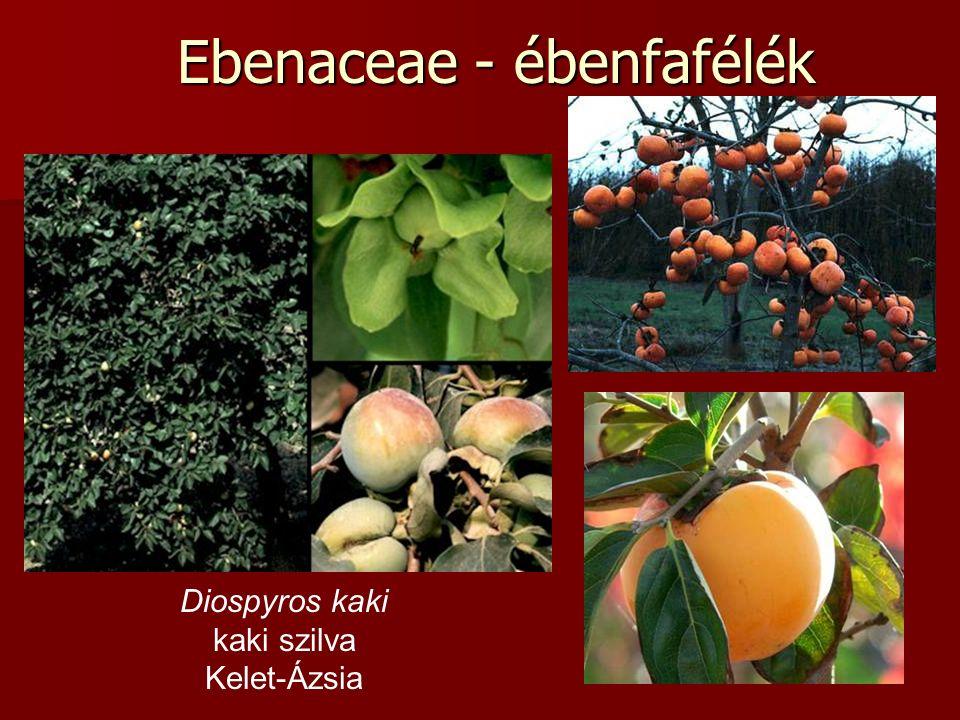 Ebenaceae - ébenfafélék Diospyros kaki kaki szilva Kelet-Ázsia