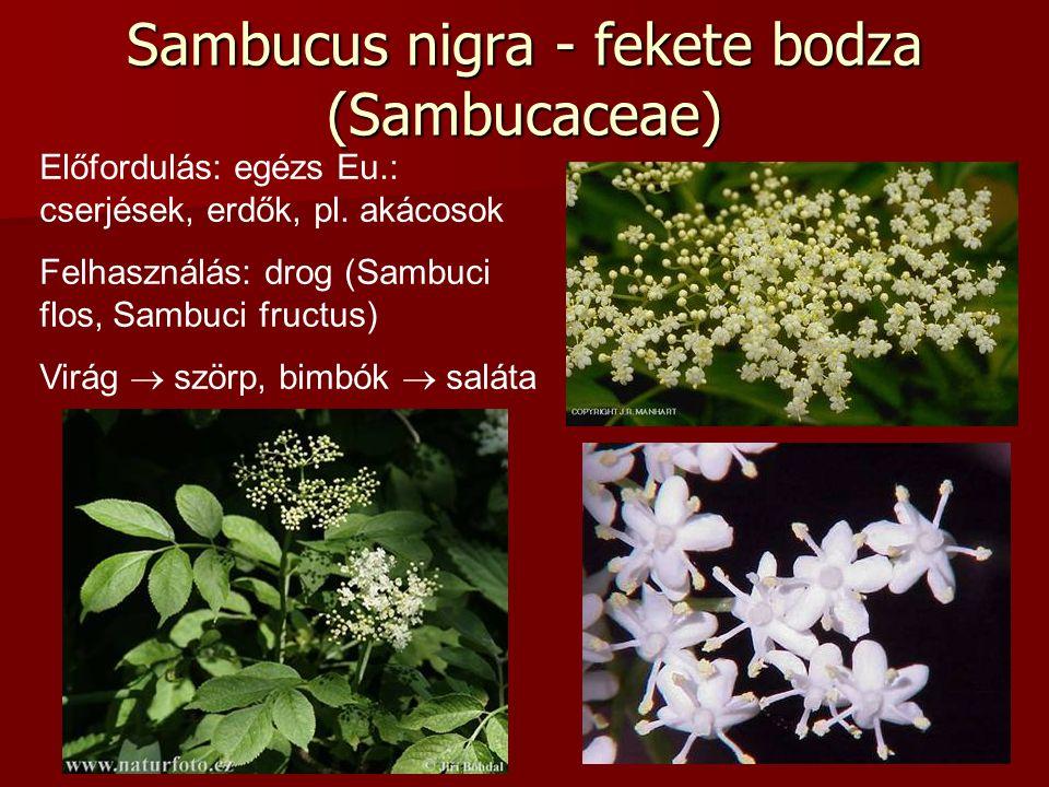 Sambucus nigra - fekete bodza (Sambucaceae) Előfordulás: egézs Eu.: cserjések, erdők, pl. akácosok Felhasználás: drog (Sambuci flos, Sambuci fructus)