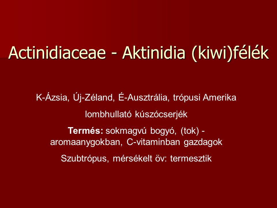 Actinidiaceae - Aktinidia (kiwi)félék K-Ázsia, Új-Zéland, É-Ausztrália, trópusi Amerika lombhullató kúszócserjék Termés: sokmagvú bogyó, (tok) - aromaanygokban, C-vitaminban gazdagok Szubtrópus, mérsékelt öv: termesztik