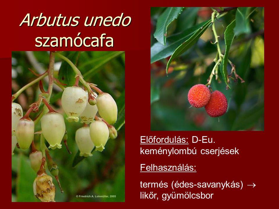 Arbutus unedo szamócafa Előfordulás: D-Eu. keménylombú cserjések Felhasználás: termés (édes-savanykás)  likőr, gyümölcsbor