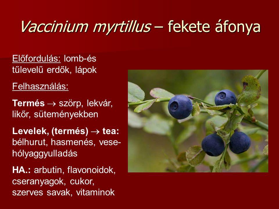 Vaccinium myrtillus – fekete áfonya Előfordulás: lomb-és tűlevelű erdők, lápok Felhasználás: Termés  szörp, lekvár, likőr, süteményekben Levelek, (te