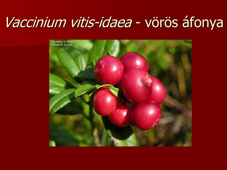 Vaccinium vitis-idaea - vörös áfonya