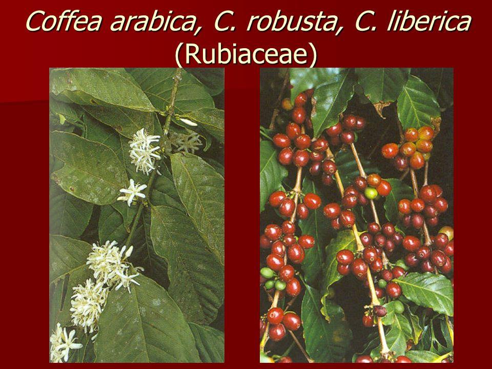 Coffea arabica, C. robusta, C. liberica (Rubiaceae)