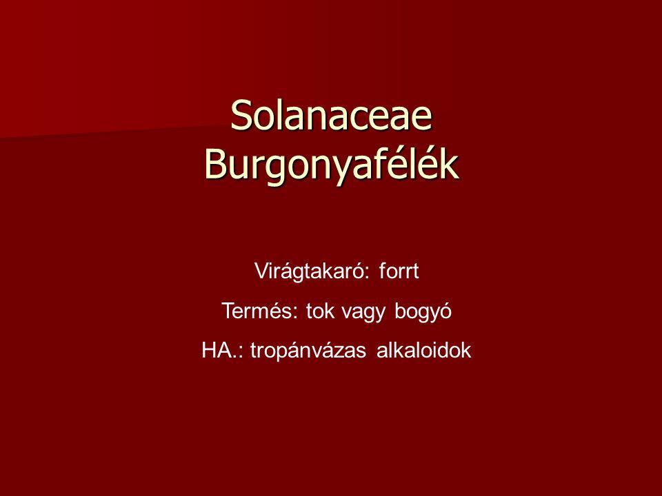 Solanaceae Burgonyafélék Virágtakaró: forrt Termés: tok vagy bogyó HA.: tropánvázas alkaloidok