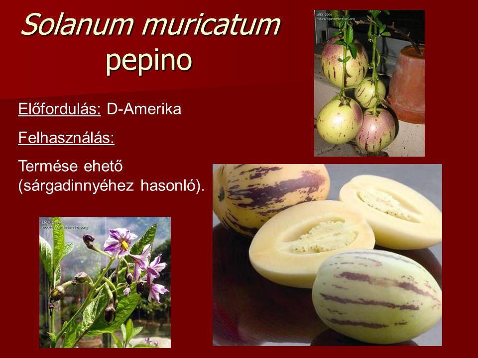 Solanum muricatum pepino Előfordulás: D-Amerika Felhasználás: Termése ehető (sárgadinnyéhez hasonló).